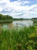 Naturliga våtmarker med liljablock Royaltyfria Bilder