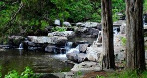 Naturliga vattenfall och cederträ arkivbild