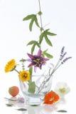 Naturligt ört- och blommaval för växt- medicin Royaltyfri Foto