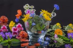Naturligt ört- och blommaval som används i växt- medicin på svart Royaltyfria Foton