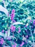 naturligt Fotografering för Bildbyråer