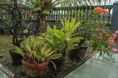 Naturligt arbeta i trädgården med blomman på krukorna efter regn fotografering för bildbyråer