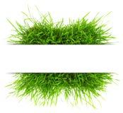 Naturligt baner med nytt gräs Arkivbilder