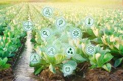Naturligt bevattna av jordbruk Höga teknologier och innovationer i agro-bransch Studiekvalitet av jord och skörden vetenskapligt arkivbilder