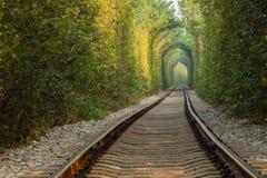 Naturligt bildande av träden och den järnväg tunnelen Arkivbild