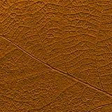 Naturligt blad orcher-färgad textur med det strimmiga ingreppet fotografering för bildbyråer