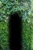 Naturligt bladhål för dörr Royaltyfria Foton