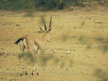 Naturligt djurliv arkivbilder