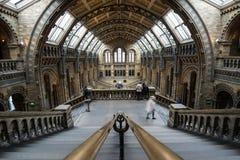 naturligt england historielondon museum Royaltyfri Foto