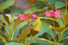 Naturligt fotografi Royaltyfri Foto