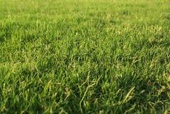 naturligt gräs Arkivfoton