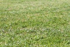 Naturligt gräs i vår royaltyfri foto