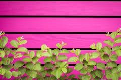 Naturligt grönt blad framme av horisontalträbrädet Fotografering för Bildbyråer