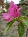 Naturligt grönt blommaväxtfotografi royaltyfri foto