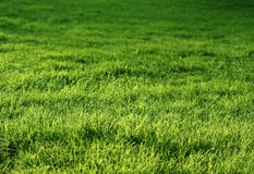 Naturligt grönt gräs Royaltyfria Bilder