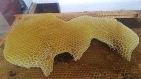 Naturligt guld- honungskakabi som är fullvuxet vid bin royaltyfri fotografi