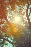 Naturligt höstträd på himmel Arkivfoton