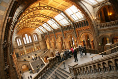 naturligt historiemuseum Fotografering för Bildbyråer