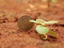 Naturligt indiskt mynt royaltyfri fotografi