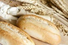 Naturligt korn för mjöl Royaltyfri Foto