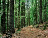 naturligt landskap fotografering för bildbyråer