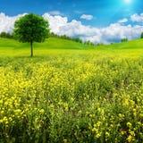 Naturligt landskap för abstrakt sommar Royaltyfri Fotografi
