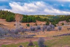 Naturligt landskap med granträd bakgrund och moln fotografering för bildbyråer