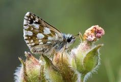 Naturligt liv; fjäril i natur Fauna-/florabegrepp fotografering för bildbyråer