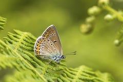 Naturligt liv; fjäril i natur Fauna-/florabegrepp arkivfoto