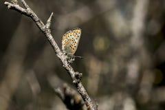Naturligt liv; fjäril i natur Fauna-/florabegrepp royaltyfria foton
