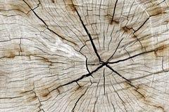 Naturligt mönstra Närbildträsnitttextur med trädet för bränningram arkivbild