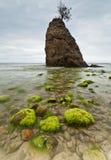 Naturligt Moss Stone royaltyfri bild