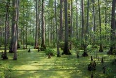 Naturligt område för gömställeflodstat, Illinois, USA arkivfoton