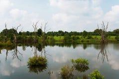 Naturligt område för gömställeflodstat, Illinois, USA royaltyfria foton