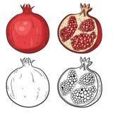 Naturligt organiskt sötsaksnitt och skivad granatäpple Royaltyfri Bild