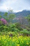 Naturligt parkera inre dimmigt bergområde Royaltyfri Foto