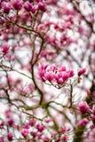 Naturligt parkera, träd, blommor Arkivbild