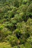 naturligt pristine för buske arkivbilder