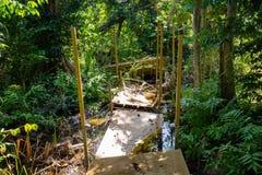 Naturligt pterocarpusskogträsk i Puerto Rico royaltyfri bild