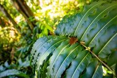 Naturligt pterocarpusskogträsk i Puerto Rico fotografering för bildbyråer