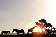Naturligt safarilandskap i ljus av solnedgången royaltyfri foto
