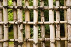 naturligt skydd för bambu Arkivfoton