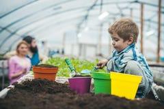 naturligt smutsa rik naturlig jord för att arbeta i trädgården litet pojkebondearbete i växthus med naturlig jord naturligt smuts royaltyfri bild