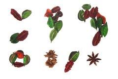 naturligt symbol Royaltyfria Bilder