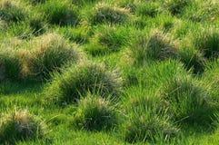 Gräs texturerar Arkivbilder