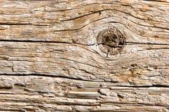 naturligt texturträ för closeup royaltyfri foto