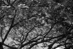 Naturligt träd - naturliga Arbol Arkivfoto