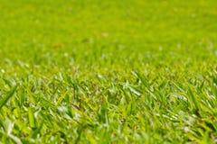 Naturligt utomhus- grönt gräs, grund dof Arkivbilder