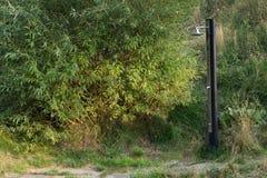 Naturligt utomhus- trädgårds- ställe för metallduschvår inget som är tomt, träd royaltyfria foton