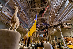 Naturligt världsgalleri-medborgare museum av Skottland Royaltyfria Bilder